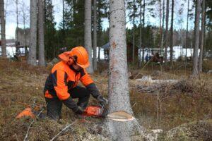 gozdar v gozdu pri delu z motorno žago